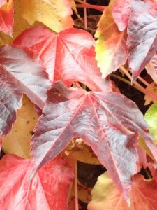 autumn_leaves_multiple-minds-ltd_2